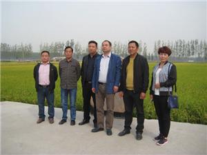 公司领导考察vwin德赢尤文图斯网址绿色食品基地